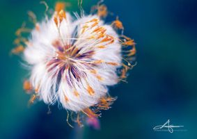 Fluffy Flower by Stridsberg