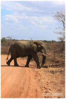 Africa 01: The Elephant by JR-Dept