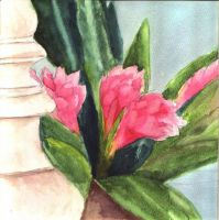 Pink Watercolor by Ashlee751