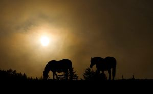 Two horses by mutrus