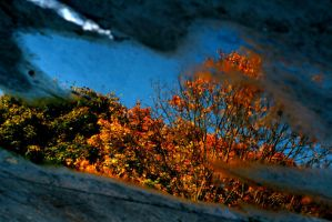 autumn in the puddle by JAKOKTO