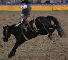 Saddle Bronc by newdystock