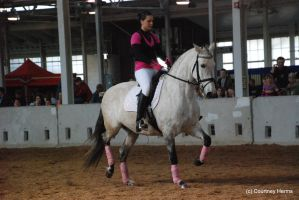 Dressage Horse Stock 3 by lee-mare