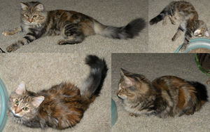 More Fluffball Angles by Leonca