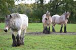 big draft horses stock 2 by horse-power