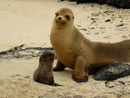 Sea lion Mum and Baby by AfroDitee