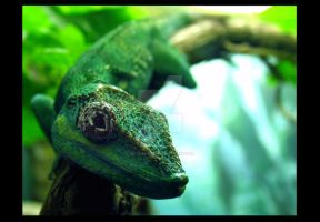 Knight Anole 2 by Benjamin12282