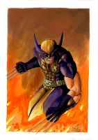 Wolverine by shiprock