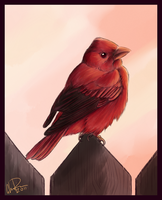 Summer Tanager by twapa