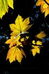 Autumnal Colours in Spring by EarthHart