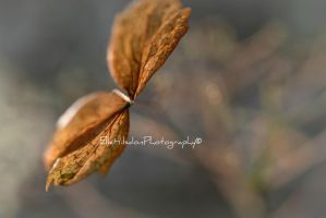 Moth-Like Leaves by EHilsdonPhotography