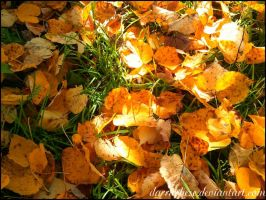 leaves-chips by DarraChese