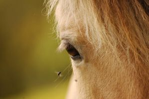 In Her Eye by LHS1505