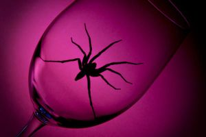 Spider In A Wineglass 2 by duronboy