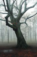 Foggy Tree by stayinwonderland