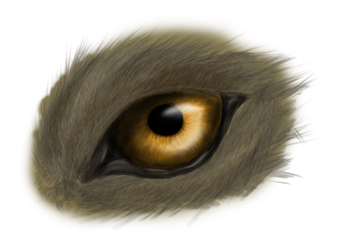 wolf eye by ghostthewerecat