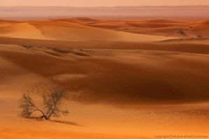 Sand Dunes 5 by itash