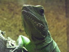 Chinese Water Dragon by ShmibProductions