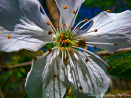 A White Miracle by Anne-Cathy