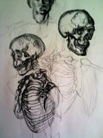 Skull and ribs study by UrsaMinor45