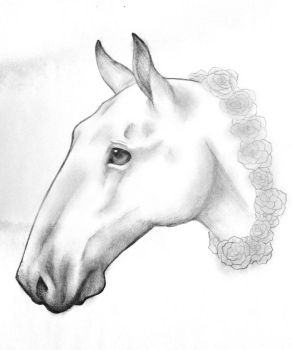 I drawed a horsey by zombiechihuahuas13