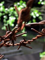 Barbed wire by altriar