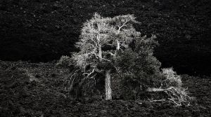 tree of knowledge by MarcCopeland