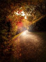Autumn Road. by 4420
