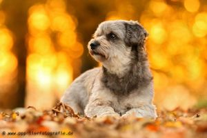 my little girl in autmn by Partridge-PetPics
