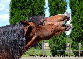 Loustique - Stock 1 by Horses--Stock