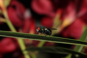 Green fly by mefisto0603
