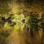 Autumn river by lostknightkg