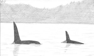 Two Orcas by Morgan-La-Fey