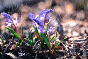 The smell of spring rain by Forestia