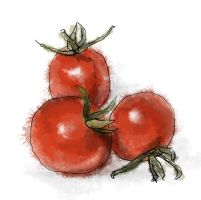 Cherry Tomatoes by torstan