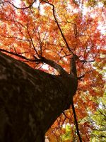 Autumn I by droool