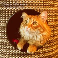 A cat's Home by TammyPhotography