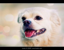My small dog by kietdc