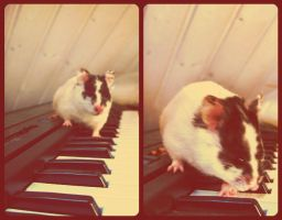 . Beau playing the piano by Snoodle