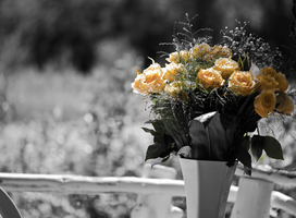 The Yellow Roses... by Lonewolf-Eyes