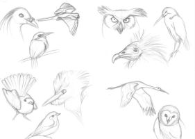 Bird Sketches 20-03-13 by TheBlack-Kat