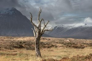 Lonely Dry Tree by AlexGutkin
