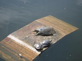 Turtles by Zbee8