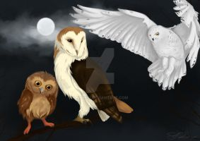 Commission - Owls by Nyx601