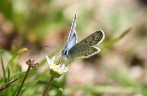another blue butterfly and a d by Kristinaphoto