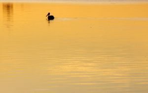 Swimming in Gold by RobertRobledo