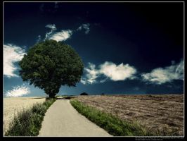 Tree and road by AfricAShoX