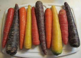 Ten Colored Carrots 1 by Windthin