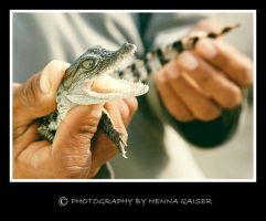 baby croc - 6 mths old by Hennaq