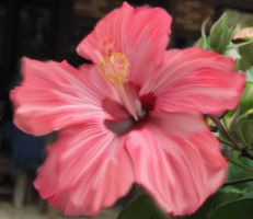 Hibisco by moxo